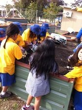 Students planting in the garden bed.